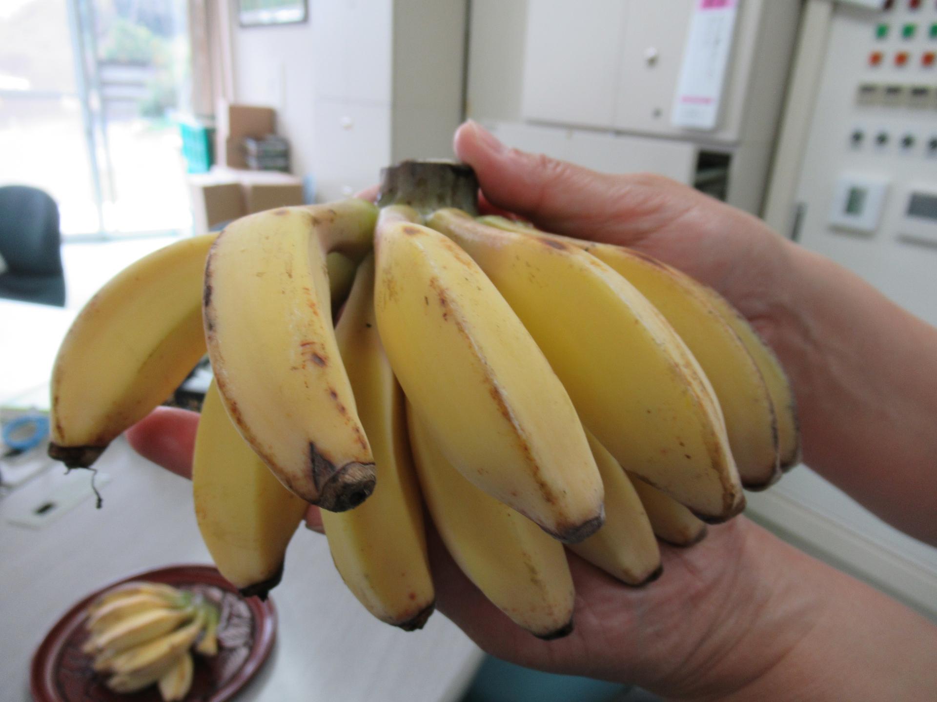 そんな「バナナ」たち…by「ゆう」の庭